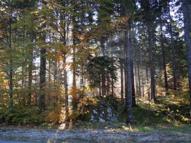Vom Yspertal ins Bodental