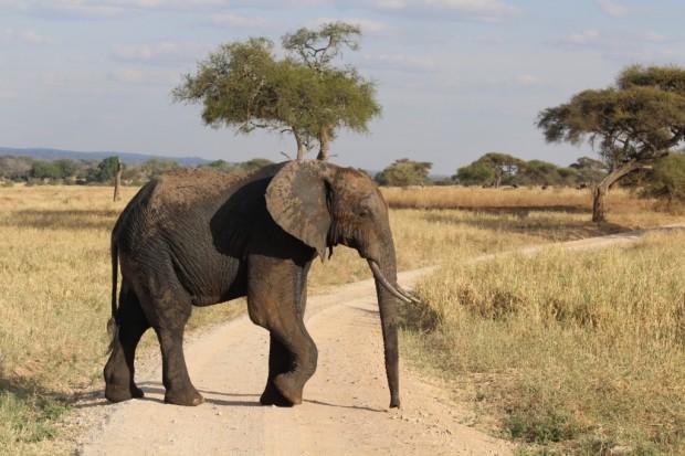 Zoo einmal anders - der Zeam im Tarangire Nationalpark